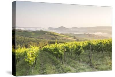 Vineyards near to Orveito, Umbria, Italy, Europe-Julian Elliott-Stretched Canvas Print