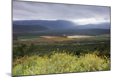 Crop circles, Cederberg Wilderness Area, Western Cape, South Africa, Africa-Christian Kober-Mounted Photographic Print