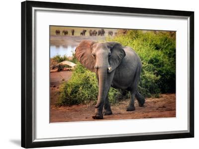 African elephant, Chobe National Park, Botswana, Africa-Karen Deakin-Framed Photographic Print