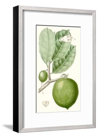 Turpin Fruit III--Framed Art Print