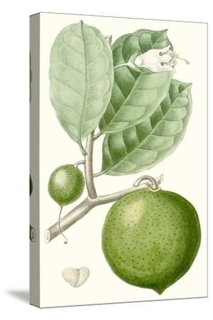 Turpin Fruit III--Stretched Canvas Print