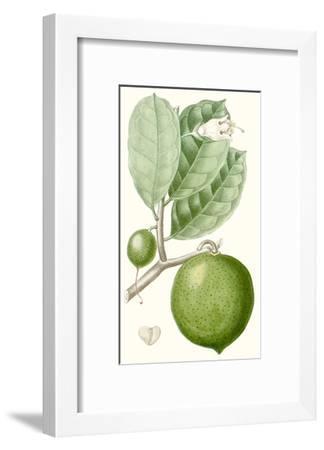 Turpin Fruit III--Framed Premium Giclee Print