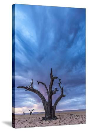 Africa, Namibia, Hardap region. A romantic sunset.-Catherina Unger-Stretched Canvas Print
