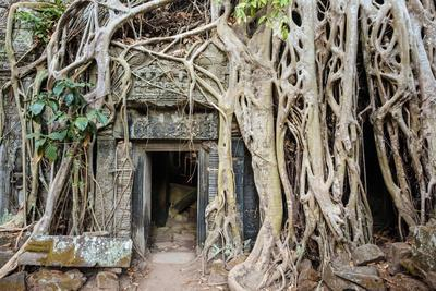 Tree roots growing on Ta Prohm temple (Rajavihara) ruins, Angkor, UNESCO World Heritage Site, Siem -Jason Langley-Framed Photographic Print
