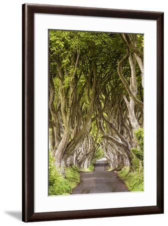 The Dark Hedges, County Antrim, Ulster region, northern Ireland, United Kingdom. Iconic trees tunne-Marco Bottigelli-Framed Photographic Print