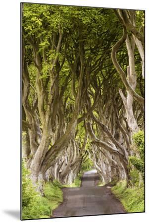 The Dark Hedges, County Antrim, Ulster region, northern Ireland, United Kingdom. Iconic trees tunne-Marco Bottigelli-Mounted Photographic Print