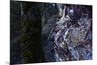 bizarre dead wood-Klaus Scholz-Mounted Photographic Print