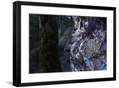 bizarre dead wood-Klaus Scholz-Framed Photographic Print