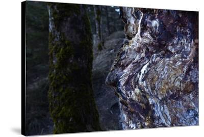 bizarre dead wood-Klaus Scholz-Stretched Canvas Print