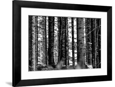 Wood-Jule Leibnitz-Framed Photographic Print