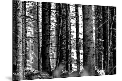 Wood-Jule Leibnitz-Mounted Photographic Print