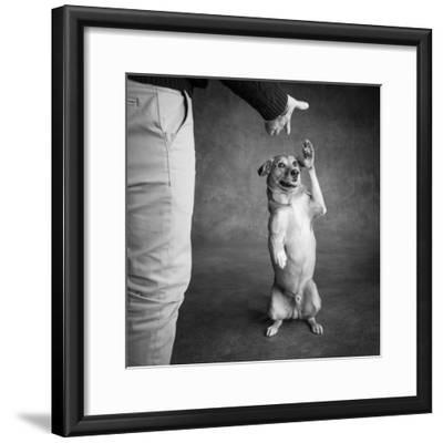 Portrait of Red Bone Coon Mix Dog with Legs of a Man--Framed Photographic Print