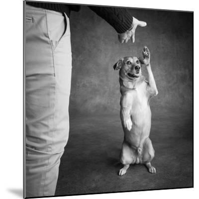 Portrait of Red Bone Coon Mix Dog with Legs of a Man--Mounted Photographic Print