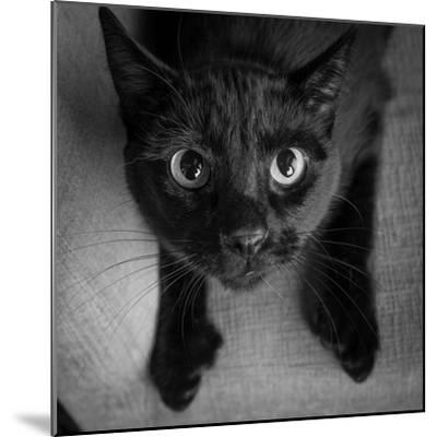 Portrait of a Black Cat on a Chair--Mounted Photographic Print