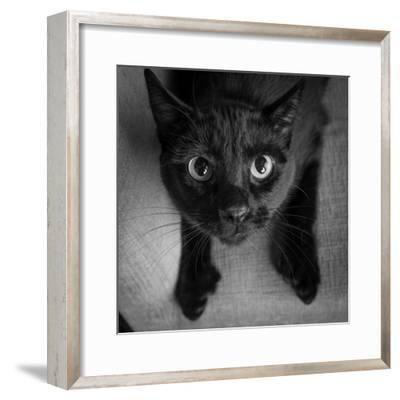 Portrait of a Black Cat on a Chair--Framed Photographic Print