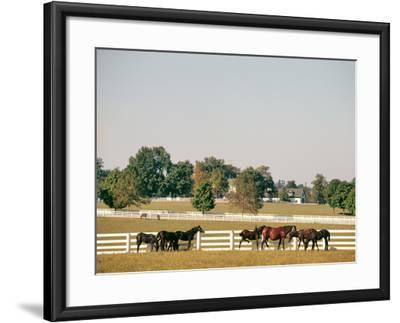 1990s Small Group of Horses Beside White Pasture Fence Late in Summer--Framed Photographic Print