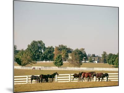 1990s Small Group of Horses Beside White Pasture Fence Late in Summer--Mounted Photographic Print