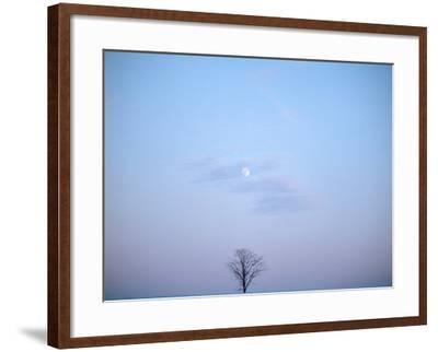 Single Tree in Winter Landscape Evening Moon--Framed Photographic Print