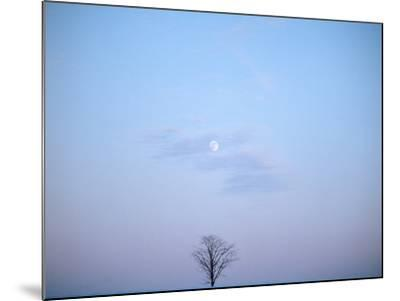 Single Tree in Winter Landscape Evening Moon--Mounted Photographic Print