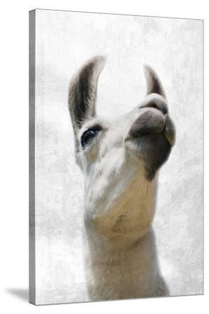Pondering Llama-Marcus Prime-Stretched Canvas Print