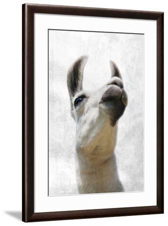Pondering Llama-Marcus Prime-Framed Photographic Print