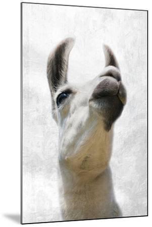 Pondering Llama-Marcus Prime-Mounted Photographic Print