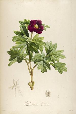 Vintage Botanical 186-Tina Carlson-Framed Art Print