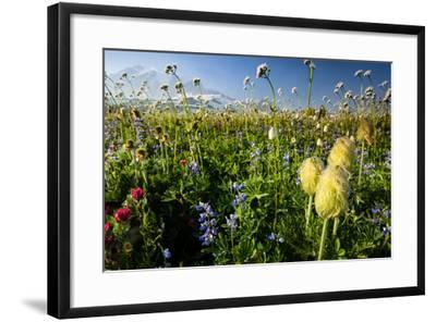 Close-Up of Wildflowers, Mount Rainier National Park, Washington State, USA--Framed Photographic Print