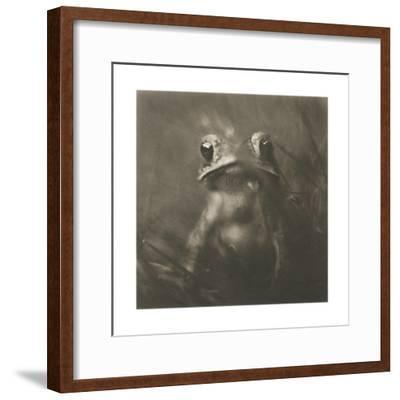 Frog-David Johndrow-Framed Photographic Print