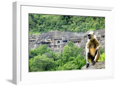 Grey langur monkey (Hanuman Langur) (Semnopithecus sp.) outside the Ajanta Caves, UNESCO World Heri-Alex Robinson-Framed Photographic Print