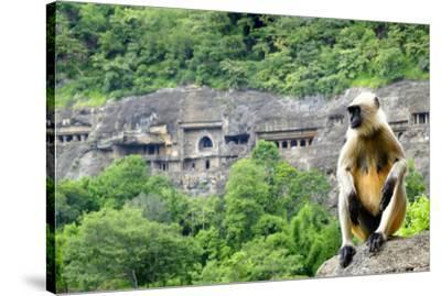 Grey langur monkey (Hanuman Langur) (Semnopithecus sp.) outside the Ajanta Caves, UNESCO World Heri-Alex Robinson-Stretched Canvas Print