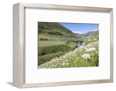 Typical red Swiss train on Hospental Viadukt surrounded by creek and blooming flowers, Andermatt, C-Roberto Moiola-Framed Photographic Print