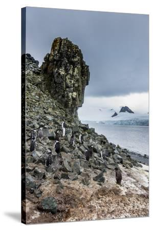 Penguins below dramatic rock formations, Half Moon Bay, South Sheltand islands, Antarctica-Michael Runkel-Stretched Canvas Print