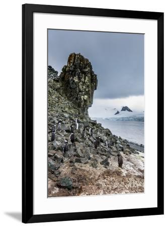 Penguins below dramatic rock formations, Half Moon Bay, South Sheltand islands, Antarctica-Michael Runkel-Framed Photographic Print
