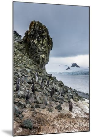 Penguins below dramatic rock formations, Half Moon Bay, South Sheltand islands, Antarctica-Michael Runkel-Mounted Photographic Print
