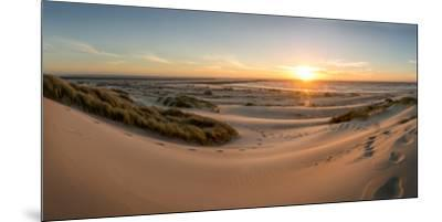 Sand dunes, grass, and driftwood at sunset on the Oregon coast, Oregon, United States of America, N-Tyler Lillico-Mounted Premium Photographic Print