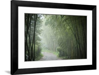Bamboo Forest, Sichuan Province, China, Asia-Michael Snell-Framed Photographic Print