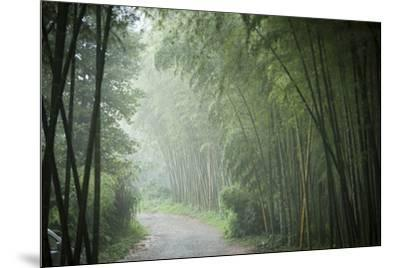 Bamboo Forest, Sichuan Province, China, Asia-Michael Snell-Mounted Photographic Print