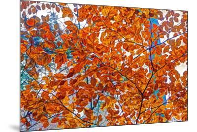 Autumnal forest, Kastel-Staadt, Rhineland-Palatinate (Rheinland-Pfalz), Germany, Europe-Hans-Peter Merten-Mounted Photographic Print
