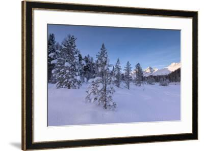Snow covered trees, Lej da Staz, St. Moritz, Engadine, Canton of Graubunden (Grisons), Switzerland,-Roberto Moiola-Framed Photographic Print
