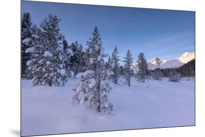 Snow covered trees, Lej da Staz, St. Moritz, Engadine, Canton of Graubunden (Grisons), Switzerland,-Roberto Moiola-Mounted Photographic Print