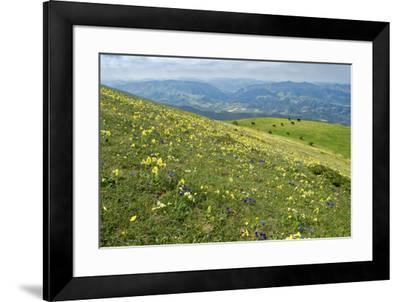 Wild flowers in bloom and horses, Mountain Acuto, Apennines, Umbria, Italy, Europe-Lorenzo Mattei-Framed Photographic Print