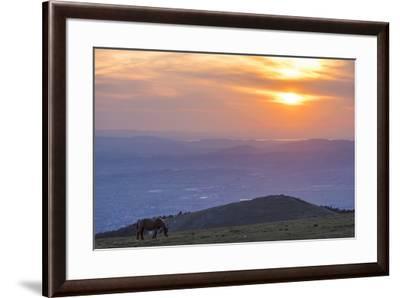 Horse in the fields, Mount Subasio, Umbria, Italy, Europe-Lorenzo Mattei-Framed Photographic Print