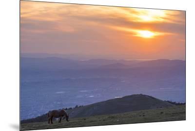 Horse in the fields, Mount Subasio, Umbria, Italy, Europe-Lorenzo Mattei-Mounted Photographic Print