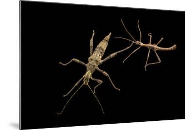 Trachyaretaon species at the Budapest Zoo.-Joel Sartore-Mounted Photographic Print