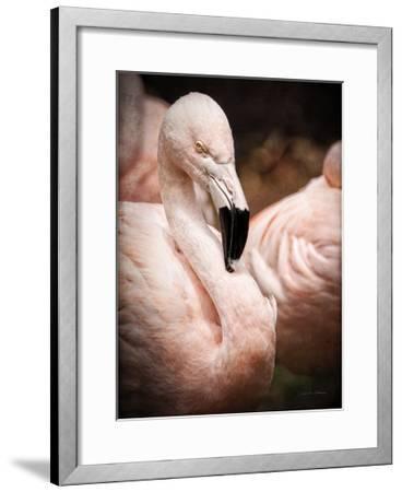 Chilean Flamingo II-Debra Van Swearingen-Framed Art Print
