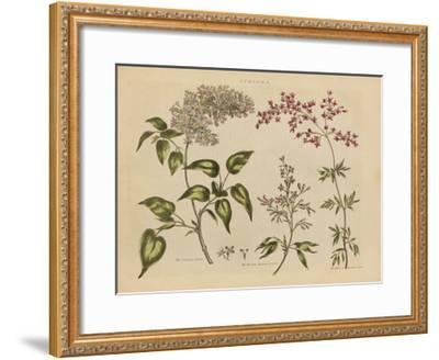 Herbal Botanical I-Wild Apple Portfolio-Framed Art Print