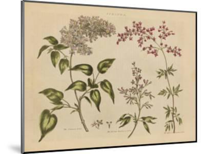 Herbal Botanical I-Wild Apple Portfolio-Mounted Art Print