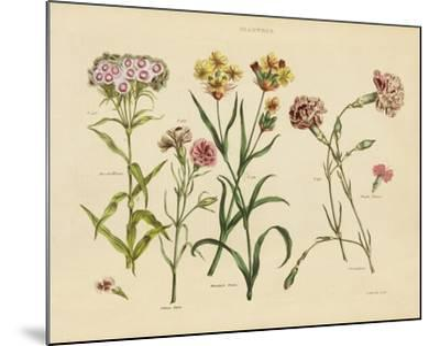 Herbal Botanical VIII-Wild Apple Portfolio-Mounted Art Print