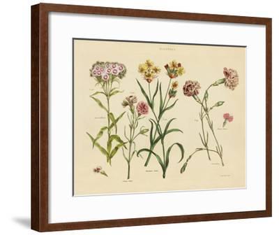 Herbal Botanical VIII-Wild Apple Portfolio-Framed Art Print